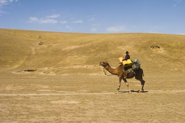 Boy riding camel, between Maimana and Mazar-I-Sharif, Afghanistan, Asia
