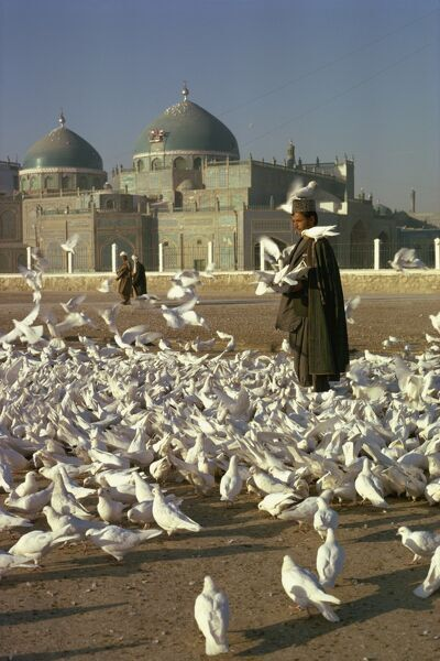 Man feeding white doves in front of the shrine of Ali at Mazar-i-Sharif in Afghanistan, Asia
