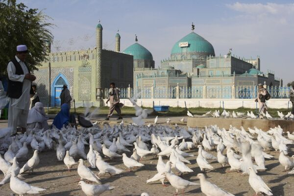 People feeding the famous white pigeons, Shrine of Hazrat Ali, Mazar-I-Sharif, Balkh province, Afghanistan, Asia