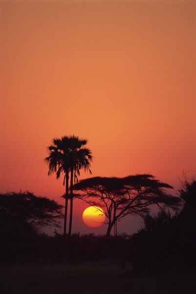 Tranquil scene of trees silhouetted against the sun at sunset, Okavango Delta, Botswana, Africa