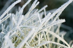 Close up of frost covered grass