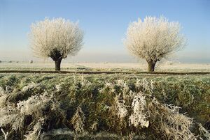 Frost covered trees and landscape, Whittlesy, near Peterborough, Cambridgeshire