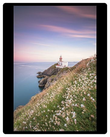 Wild flowers with Baily Lighthouse in the background, Howth, County Dublin, Republic of Ireland, Europe