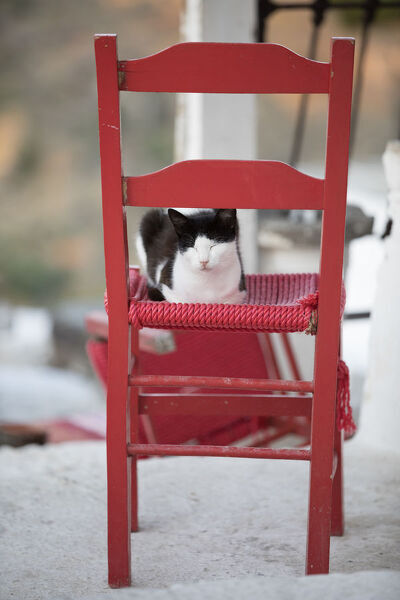 Black and white cat asleep on red chair, Kastro, Sifnos, Cyclades, Aegean Sea, Greek Islands, Greece, Europe