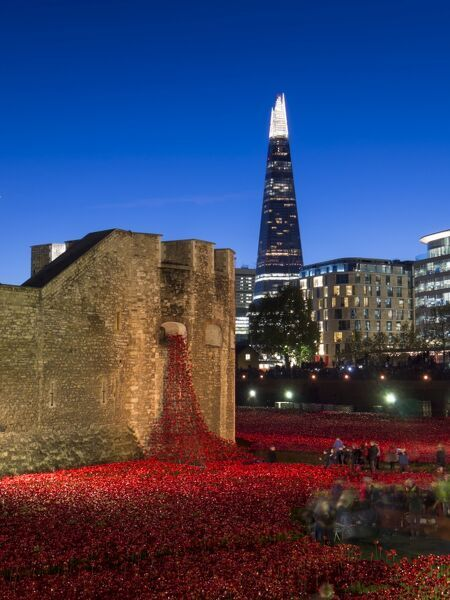 Poppies at The Tower of London Blood Swept Lands and Seas of Red picture print