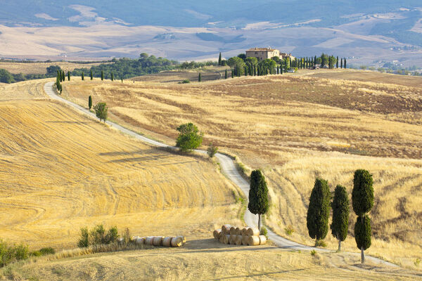 Cypress trees and fields in the afternoon sun at Agriturismo Terrapille (Gladiator Villa) near Pienza in Tuscany, Italy, Europe
