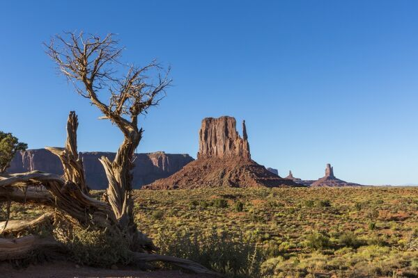 Rock formations and tree, Monument Valley, Navajo Tribal Park, Arizona, United States of America