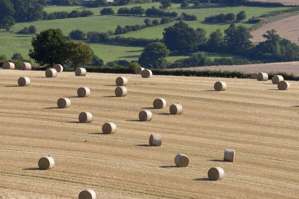 Round hay bales and Cotswold farmland at Wadfield farm, Winchcombe, Cotswolds, Gloucestershire, England, United Kingdom, Europe
