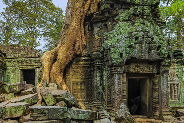 Tree root on gopura entrance at 12th century temple Ta Prohm, a Tomb Raider film location, Angkor, UNESCO World Heritage Site, Siem Reap, Cambodia, Indochina, Southeast Asia, Asia