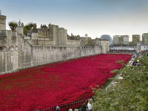Ceramic poppies forming the installation Blood Swept Lands and Seas of Red to remember