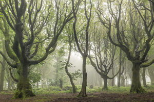 deciduous trees foggy morning north cornwall