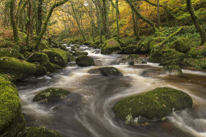 fast flowing woodland stream autumn river plym